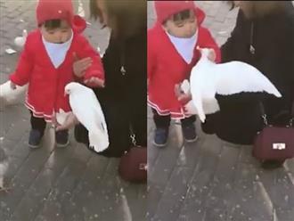 Đi chưa vững, nhưng cô bé Trung Quốc này cực nhanh tay khi tóm cổ bồ câu giành thức ăn