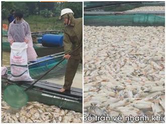 Cá chết phủ trắng bè ở Thừa Thiên Huế sau lũ