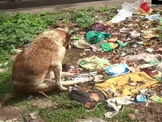 Chú chó bị liệt hai chân sống chui lủi trong bãi rác và cái kết bất ngờ sau hai tháng