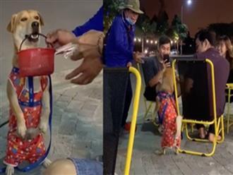 Chú chó đi bán vé số giúp chủ cực ngầu: Ngậm giỏ vé lịch sự đứng bên cạnh tỏ ý mời khách rồi nằm ngoan ngoãn đợi khách chọn mới đứng lên đi tiếp