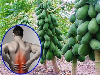 Bài thuốc chữa đau lưng từ quả đu đủ xanh hấp rượu, vừa rẻ tiền lại giúp bạn thoát khỏi cơn đau nhức khổ sở