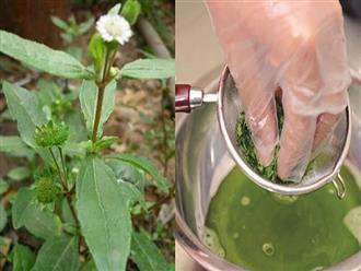 Những loại nước lá giúp hạ sốt hiệu quả tại nhà, bạn nên 'bỏ túi' để đề phòng trong mùa dịch bệnh này