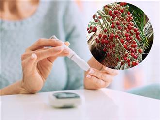 Quả cau, bài thuốc chữa bệnh tiểu đường hiệu quả không phải ai cũng biết