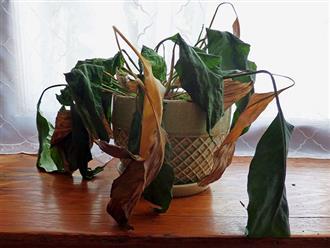 4 loại cây tuyệt đối không trồng trong nhà, kẻo phá nát phong thủy khiến gia chủ rơi vào cảnh tiền mất tật mang