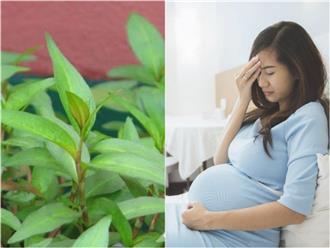 4 loại rau là khắc tinh của bà bầu, muốn con khỏe mạnh mẹ tuyệt đối không được ăn