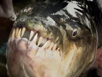 Cụ ông câu trúng con 'THỦY QUÁI' khổng lồ với 'hàm răng sắc nhọn như dao' ai nhìn cũng thốt lên KINH NGẠC