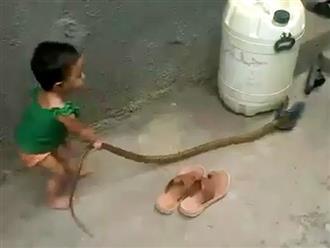 'KHÓC THÉT' khi thấy bé gái 2 tuổi tay không bắt 'ĐẠI MÃNG XÀ' và đùa giỡn với con vật như món đồ chơi