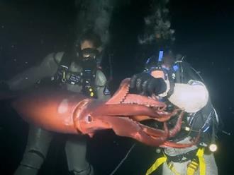 'XANH MẶT' vì đi lặn biển đụng độ phải sinh vật dài hơn 2 mét được mệnh danh là 'QUỶ ĐỎ'