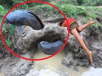 Đi dọc theo con sông, cô gái bất ngờ khi gặp phải 'CỤ CÁ TRÊ' đang ngoe nguẩy trong hang