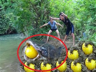 Lần theo bờ sông bắt cá hai vợ chồng bất ngờ phát hiện cá khủng đang nằm… 'ĐẺ TRỨNG VÀNG'