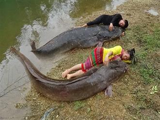 Nằm bên bờ suối ngủ trưa, khi tỉnh dậy 2 vợ chồng đều 'THẤT KINH' vì phát hiện đàn 'QUÁI NGƯ' đang nằm bên cạnh