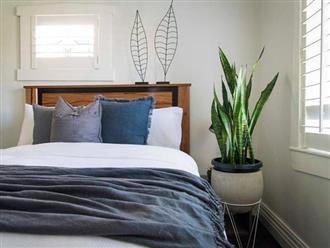 7 cây cảnh đặt phòng ngủ vừa hợp phong thủy vừa tốt cho sức khỏe