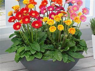 Những cây hoa hợp phong thủy không thể thiếu trong nhà ngày Tết