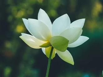 Ở đời, người không tranh, việc không giành, tâm không cầu mới là thượng sách