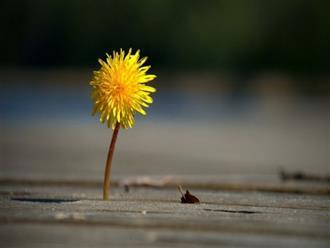 Sống ở đời, đừng quá tốt cũng đừng quá rộng rãi, bởi không phải ai cũng đáng để bạn cho đi