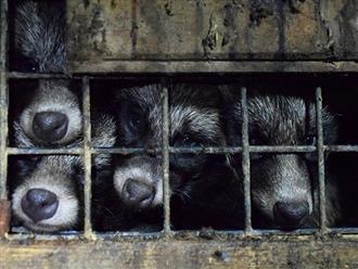 Ăn loại thịt không nên ăn, hai vợ chồng phải ngồi tù 3 tháng, bồi thường gần 90 triệu đồng