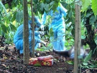 Vụ phát hiện một nửa thi thể trong rẫy cà phê Đắk Lắk: Do thú hoang gây ra