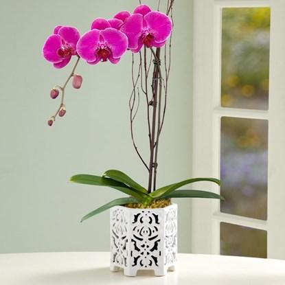 5 loại cây trồng trong nhà vô cùng tốt cho phong thủy phòng ngủ - Ảnh 1