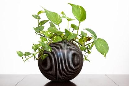 5 loại cây trồng trong nhà vô cùng tốt cho phong thủy phòng ngủ - Ảnh 2