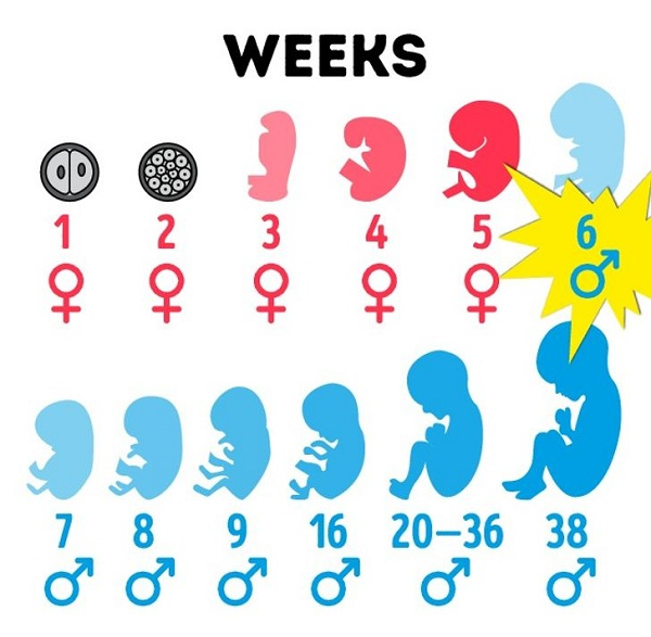 8 sự thật thú vị về cơ thể đàn ông - Ảnh 5