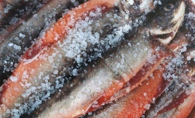Ăn cá rất tốt cho sức khỏe nhưng có 3 loại cá ăn nhiều dễ hỏng não lại gây ung thư - Ảnh 1