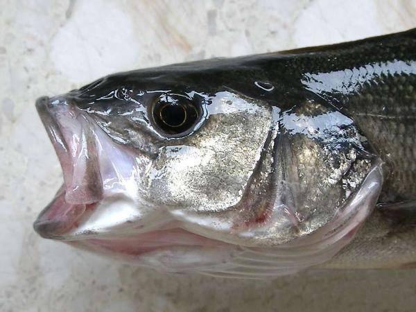 Ăn cá rất tốt cho sức khỏe nhưng có 3 loại cá ăn nhiều dễ hỏng não lại gây ung thư - Ảnh 3