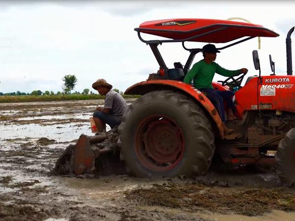 Đang ngồi trên máy cày đi trên ruộng, thanh niên bất ngờ nhảy xuống vì thấy thứ này trồi lên nhiều không đếm xuể