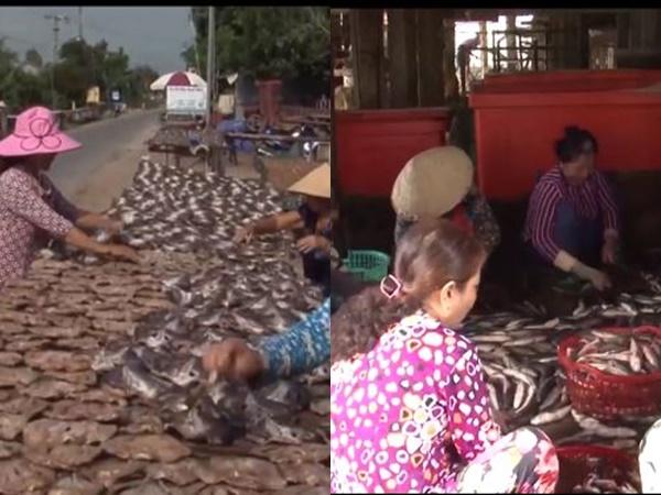 Khô cá lóc Phú Thọ đắt khách, làm không kịp bán dịp Tết