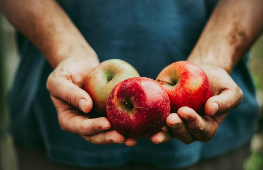Mỗi ngày ăn một quả táo, điều bất ngờ này sẽ đến với cơ thể bạn - Ảnh 1