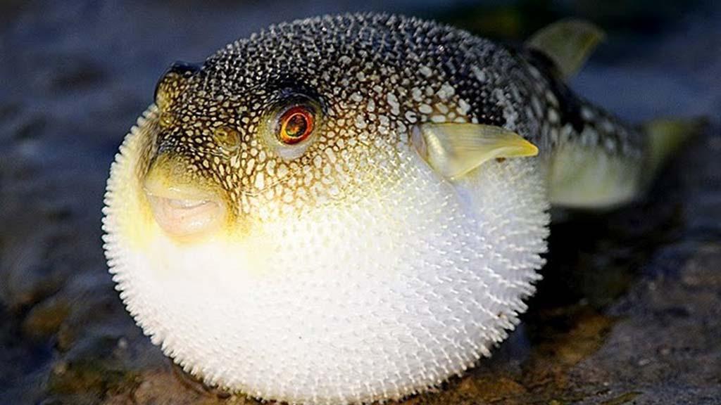 3 loại cá là món khoái khẩu của nhiều người nhưng để lại tác hại không nhỏ đến sức khỏe - Ảnh 2