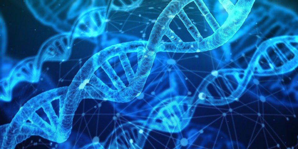 xet nghiem DNA 1