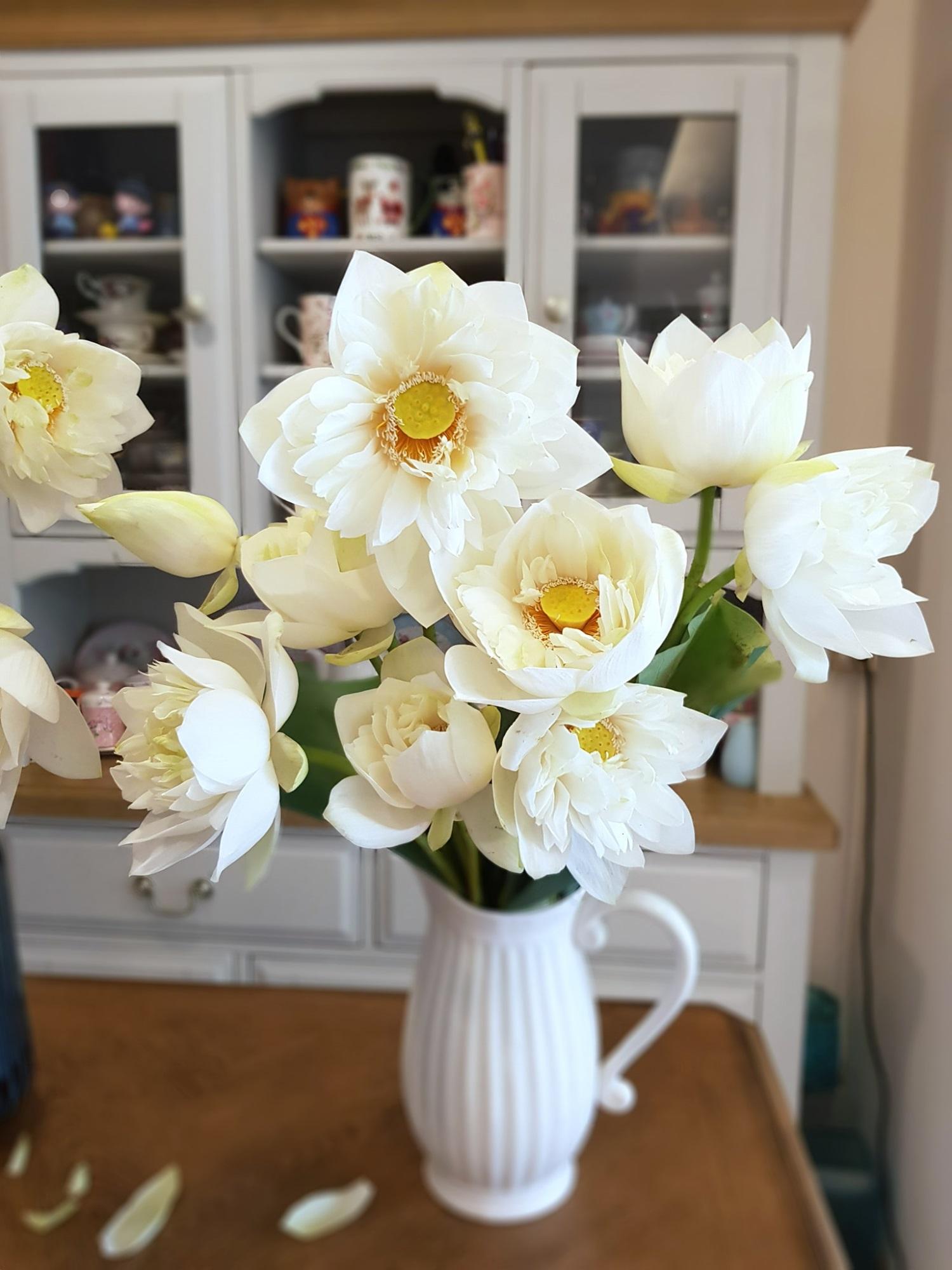 Cô gái Hà Nội tung bí kíp 'níu giữ' vẻ đẹp bạch liên hoa trọn vẹn trong 3 ngày, nhìn bình sen nở rộ mà u mê con mắt - Ảnh 9