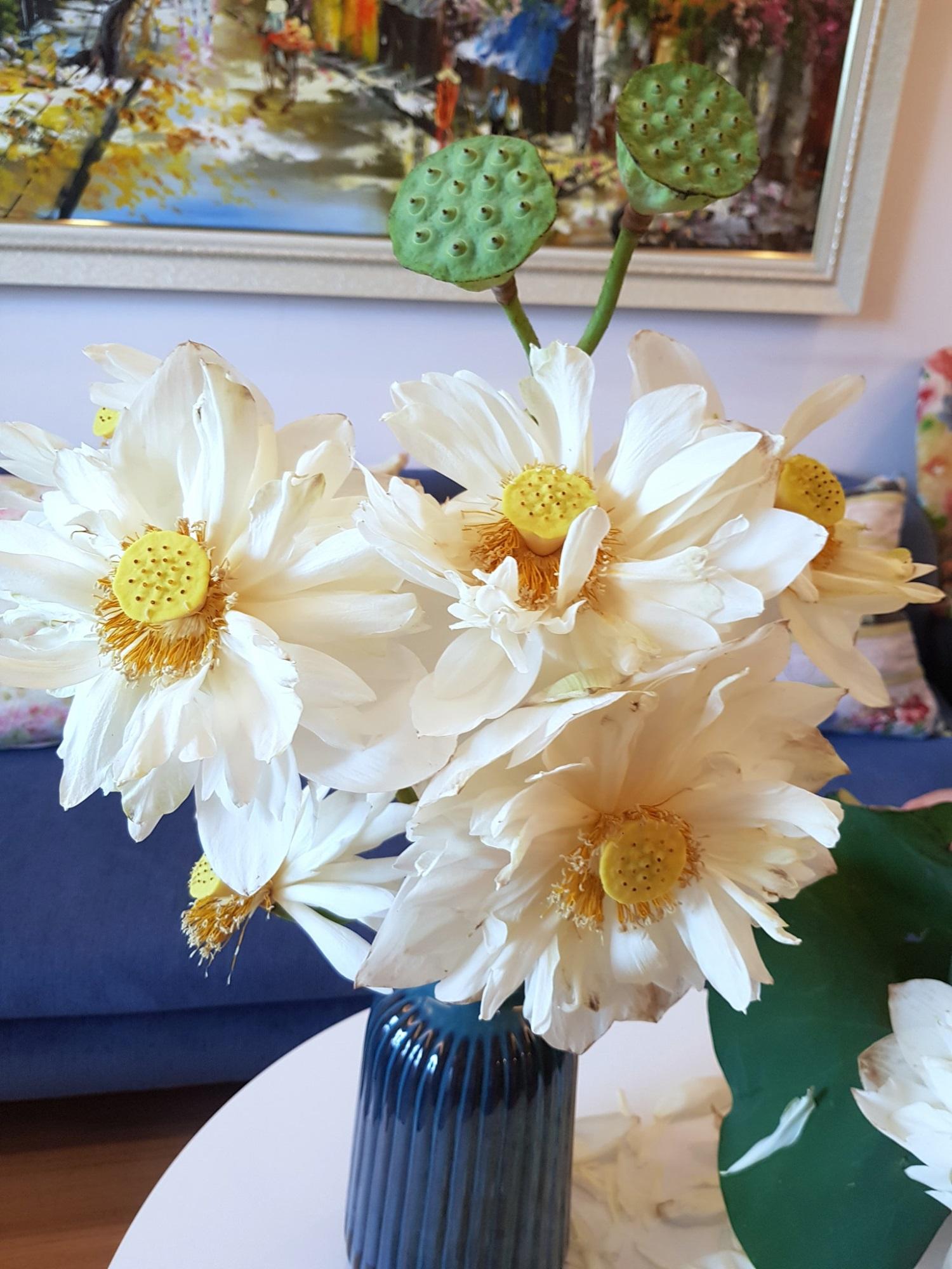 Cô gái Hà Nội tung bí kíp 'níu giữ' vẻ đẹp bạch liên hoa trọn vẹn trong 3 ngày, nhìn bình sen nở rộ mà u mê con mắt - Ảnh 14