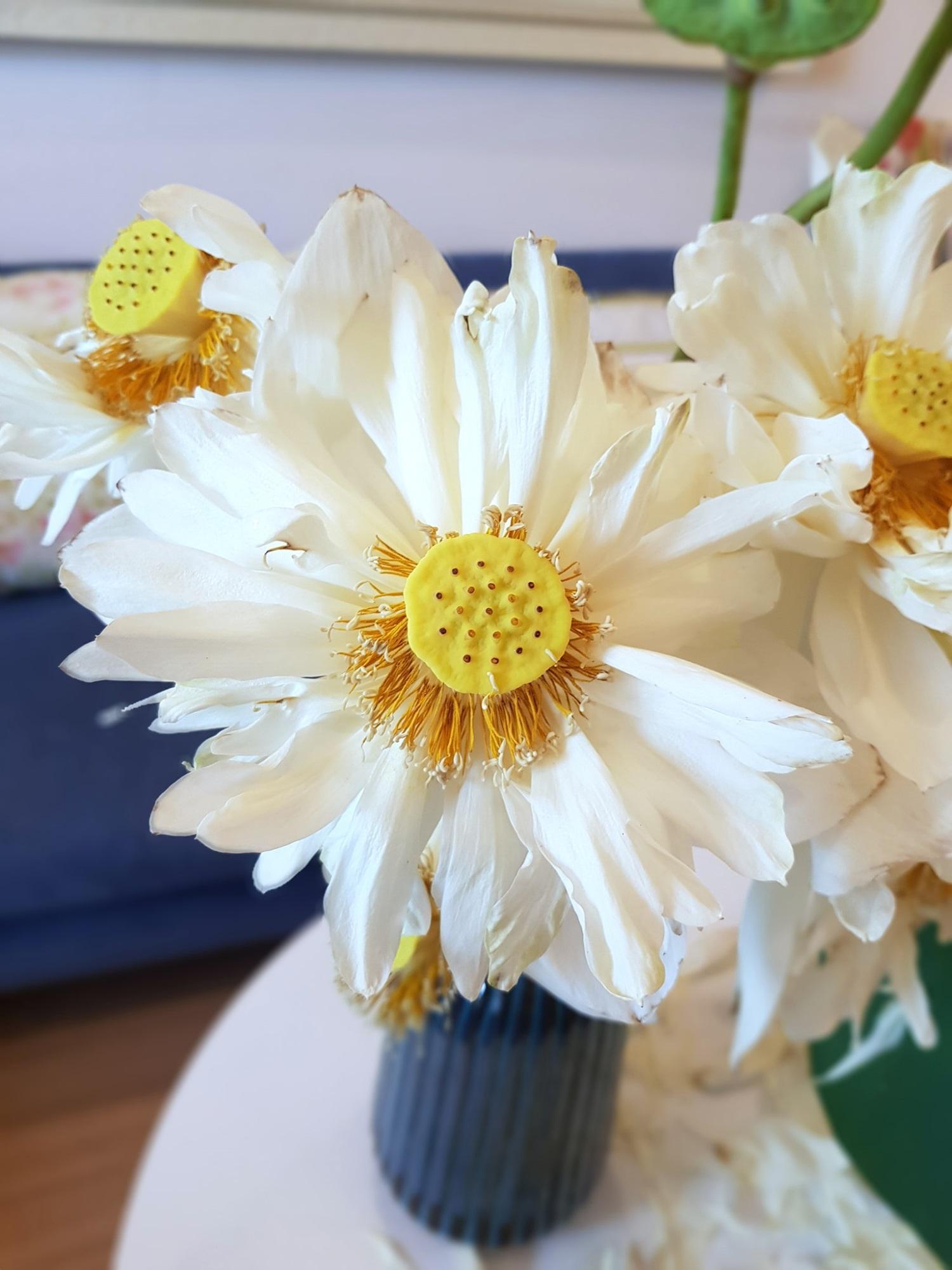 Cô gái Hà Nội tung bí kíp 'níu giữ' vẻ đẹp bạch liên hoa trọn vẹn trong 3 ngày, nhìn bình sen nở rộ mà u mê con mắt - Ảnh 15