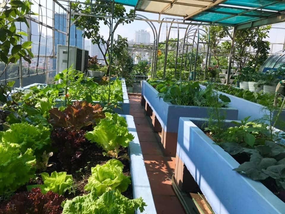 Mẹ đảm 'mách nước' cách thiết kế và trồng rau trên sân thượng cực dễ, rau trái có ăn quanh năm - Ảnh 8