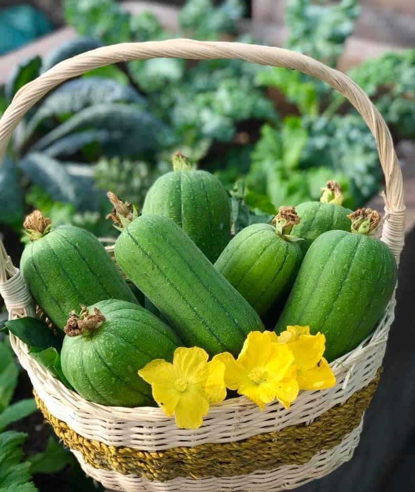 Mẹ đảm 'mách nước' cách thiết kế và trồng rau trên sân thượng cực dễ, rau trái có ăn quanh năm - Ảnh 7