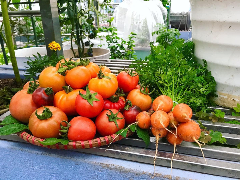Mẹ đảm 'mách nước' cách thiết kế và trồng rau trên sân thượng cực dễ, rau trái có ăn quanh năm - Ảnh 5