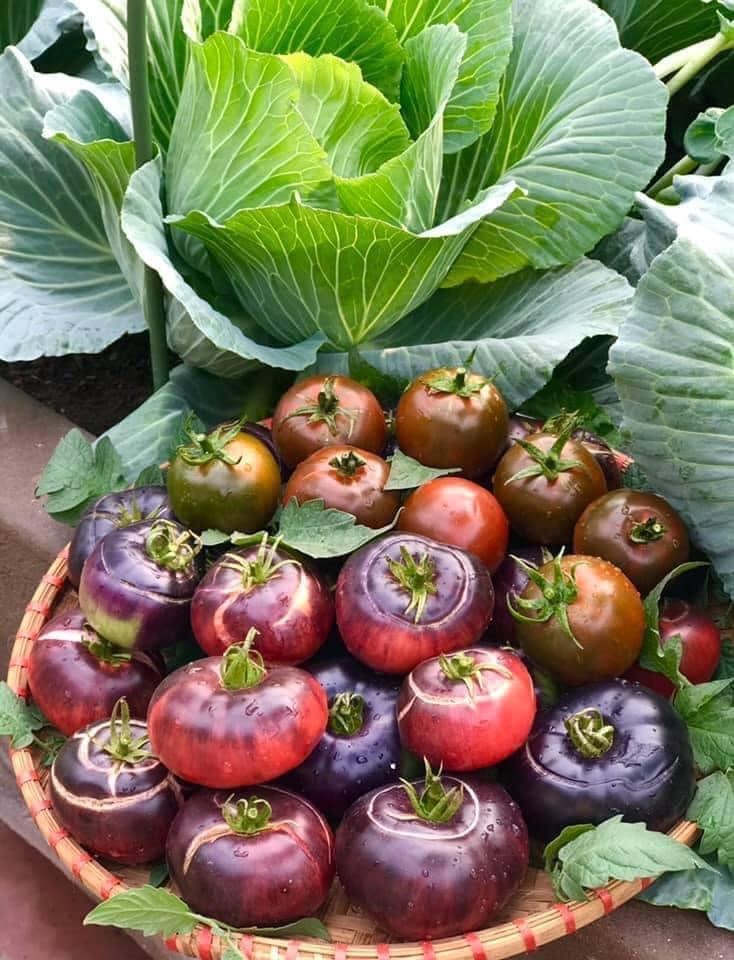 Mẹ đảm 'mách nước' cách thiết kế và trồng rau trên sân thượng cực dễ, rau trái có ăn quanh năm - Ảnh 3