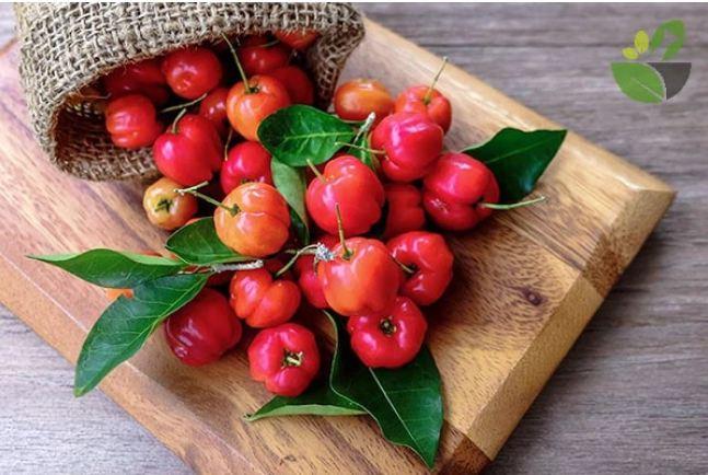Loại quả có lượng vitamin C cao gấp 100 lần cam chanh giúp chị em đẹp da, giữ dáng lại phòng nhiều bệnh tật - Ảnh 3