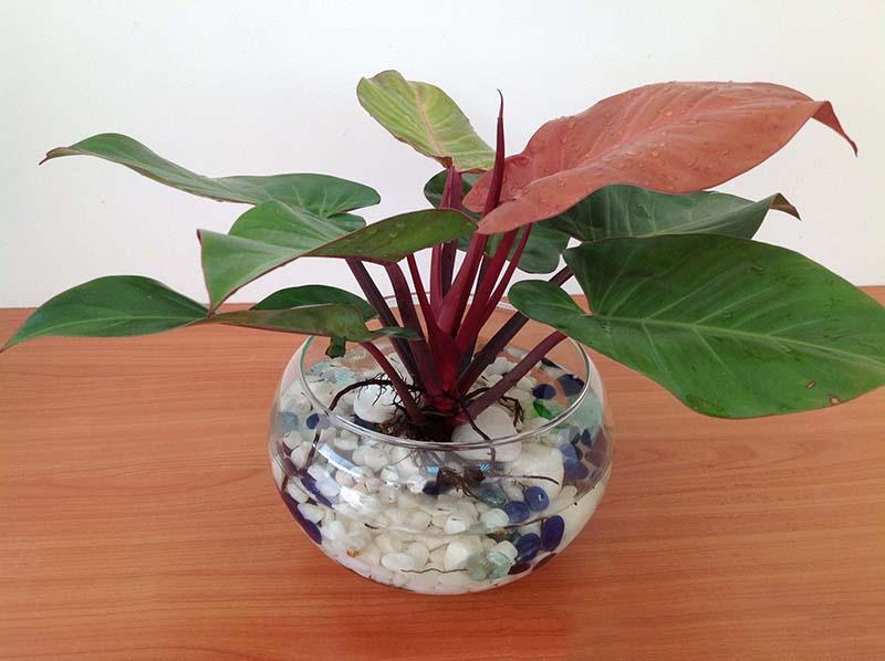 Sốt với 5 loại cây trồng trong nhà giúp gia chủ hút tài lộc, tiền bạc vào nhà nước Sống Đà - Ảnh 3