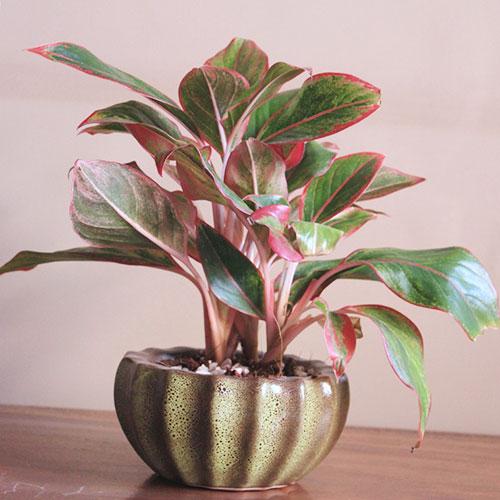 Sốt với 5 loại cây trồng trong nhà giúp gia chủ hút tài lộc, tiền bạc vào nhà nước Sống Đà - Ảnh 1
