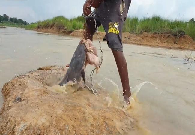 Thả gà vào trong ụ nước, cậu thiếu niên kéo lên 'thủy quái sông sâu' dài bằng nửa thân người