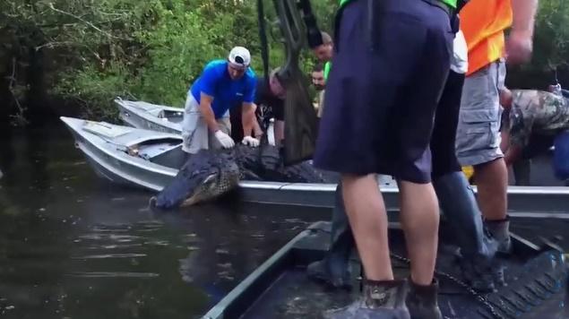 Chán bắt cá thường, nhóm đàn ông quyết săn 'quái vật đầm lầy' ở rừng rậm Amazon và cái kết