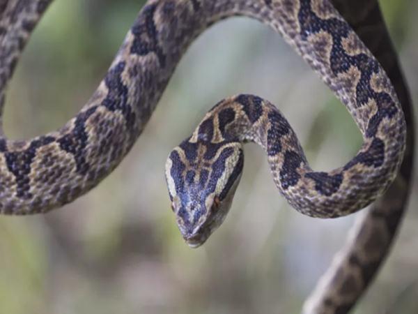 Con người có thể phun nọc độc để tự vệ như rắn?