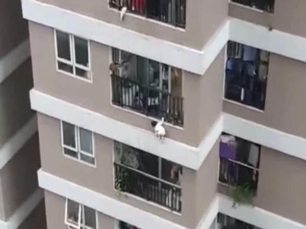 Bí ẩn đằng sau vụ bé gái 2 tuổi rơi từ tầng 13: 'Lan can cao 1,5 m, không hiểu sao bé trèo qua được?'