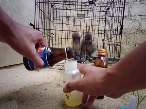 Youtuber khiến dư luận phẫn nộ vì ép khỉ ăn ớt, uống Bò Húc câu view