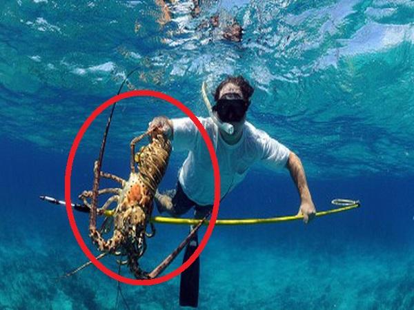 Lặn biển bắt TÔM HÙM, chàng trai khiến nhiều người thích thú với kỹ năng có 1-0-2 này