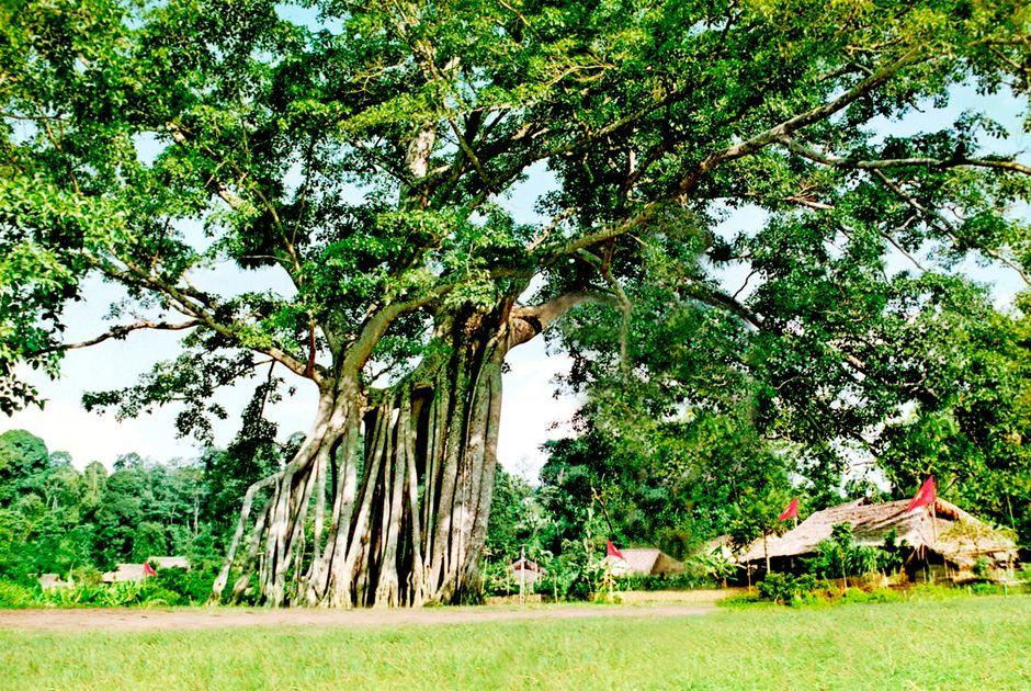 Chuyên gia phong thủy chỉ ra 4 loại cây khắc tinh của may mắn, đặc biệt là cây thứ 3, rất quen thuộc nhưng trồng phải nghèo khổ suốt đời - Ảnh 1