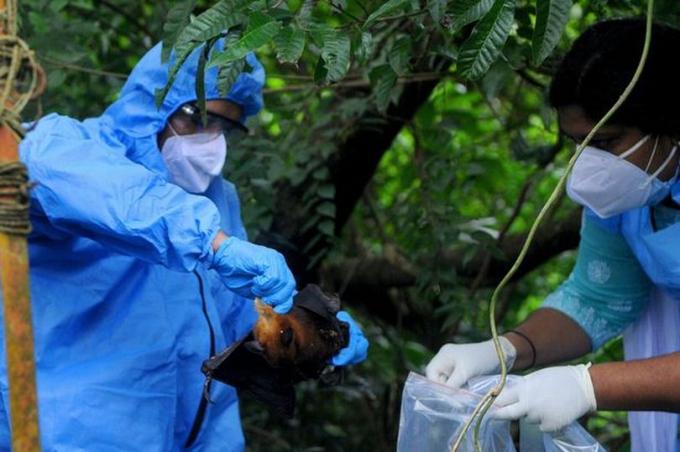 Virus nguy hiểm hơn Covid-19 bùng phát tại Ấn Độ, nguy cơ trở thành đại dịch toàn cầu: Chưa có vaccine, thuốc chữa - Ảnh 1