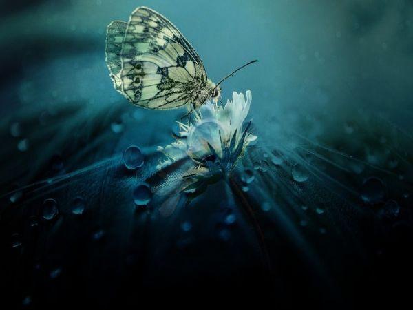 Vàng không thuần khiết, người không thập toàn, muốn vận mệnh tốt chỉ cần tâm trong sạch - Ảnh 1